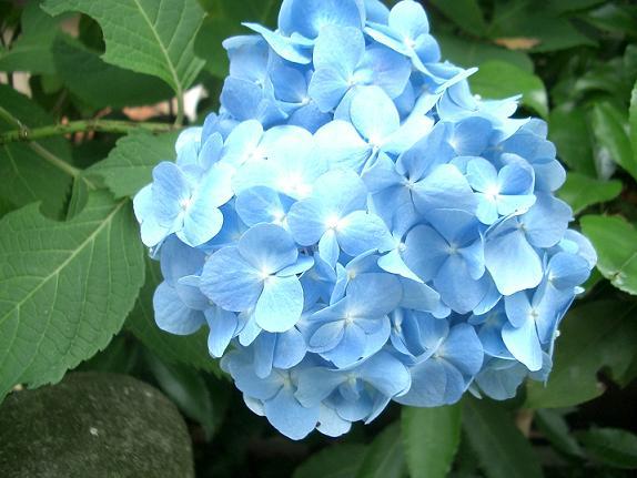 06.6.8茂った庭 006