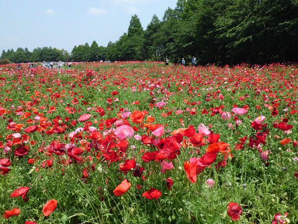 1 12.529花の丘清河寺 (32)
