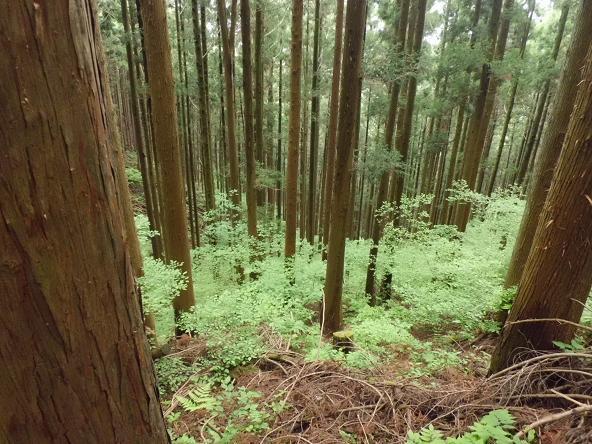 9 12.5.31丸山ハイク (57)