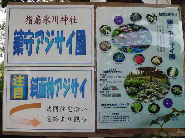 12.6.8氷川神社のあじさいブログ用1 (29)