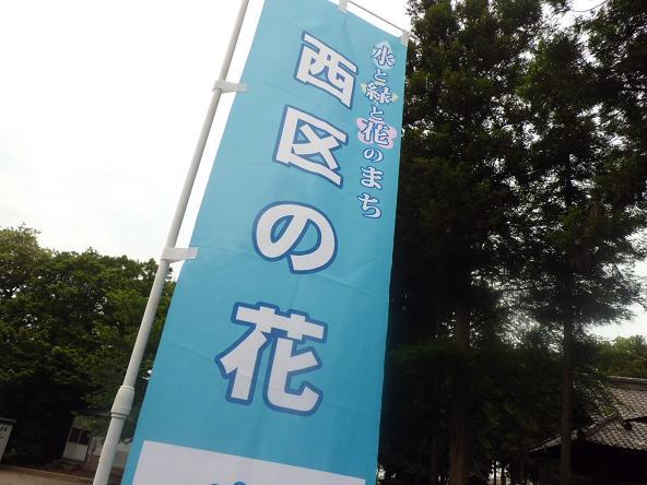 19 12.6.21あじさいの氷川神社 (93)