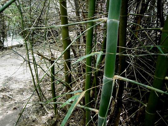 9 12.10.16山のお寺へタムブン&ハイキング (172)
