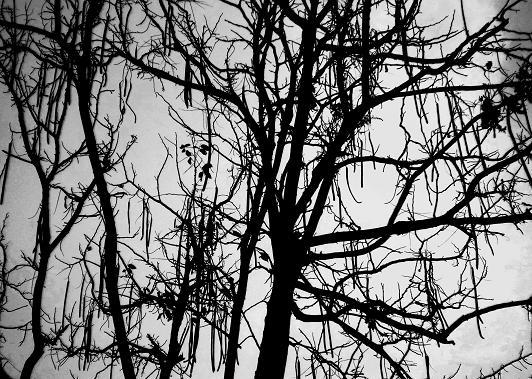 10  12.3.24黒くて長い木の実 (18)