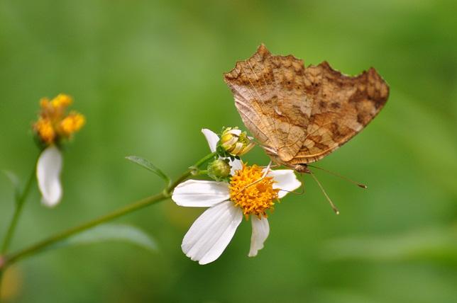 外雙溪の昆虫(5)