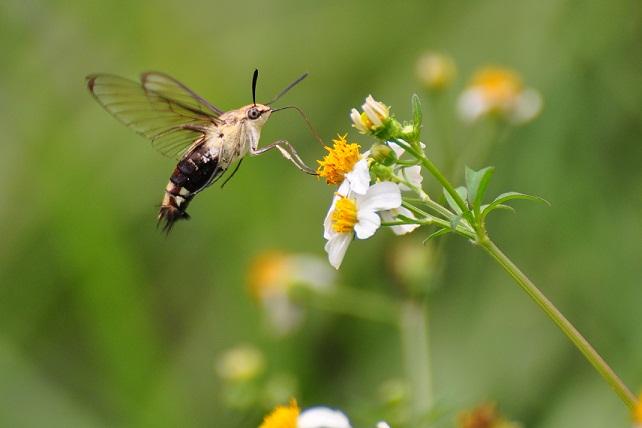 外雙溪の昆虫(4)