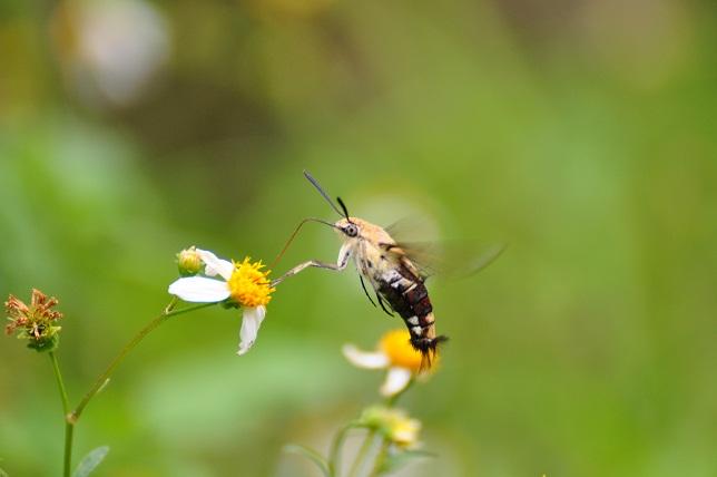外雙溪の昆虫(3)