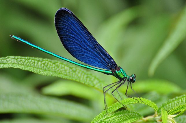 外雙溪の昆虫(11)