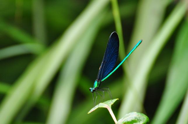 外雙溪の昆虫(8)