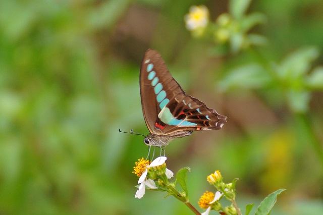 外雙溪の昆虫(7)