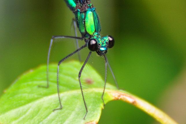 外雙溪の昆虫(13)