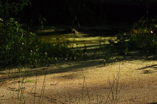 朝の植物園(3)