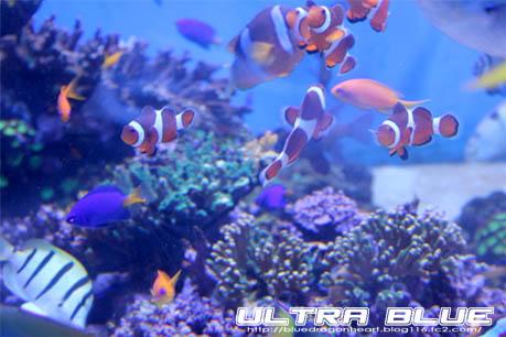 20120429_鳥羽水族館