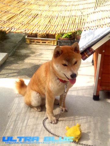 20120630_犬