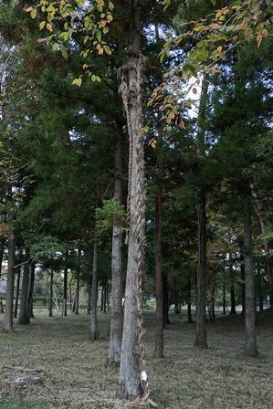 2011-10-08 華2193