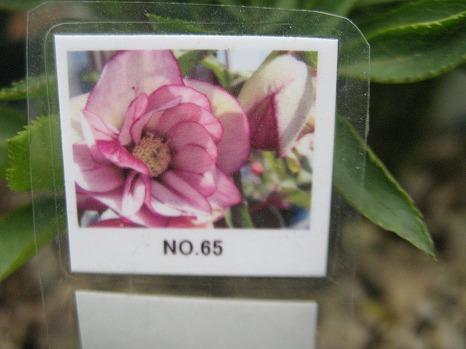 №65 (4)