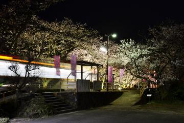 浦ノ崎駅の桜2013(1)