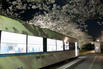 浦ノ崎駅の桜2013(2)