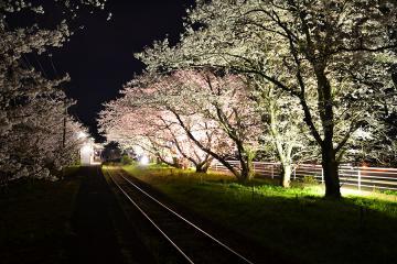 浦ノ崎駅の桜2013(4)