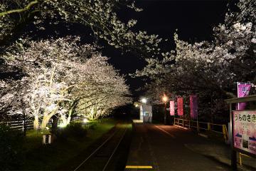 浦ノ崎駅の桜2013(6)