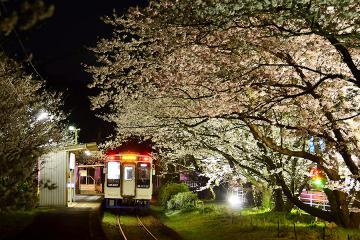 浦ノ崎駅の桜2013(8)