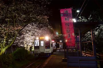 浦ノ崎駅の桜2013(9)