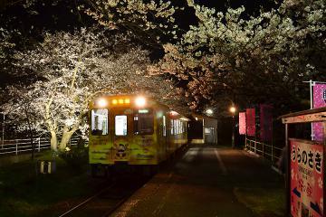 浦ノ崎駅の桜2013(10)