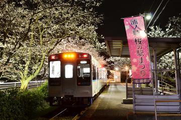 浦ノ崎駅の桜2013(11)