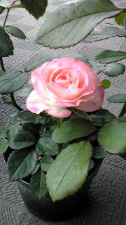 moblog_f91f0af9.jpg