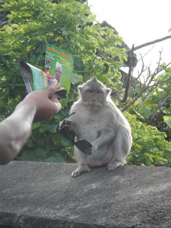 ウルワツmonkey-Bali trip
