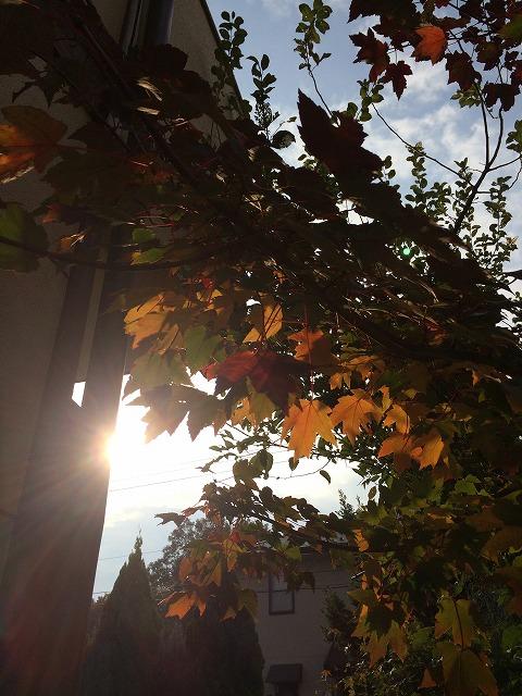 写真 2014-10-31 8 11 36