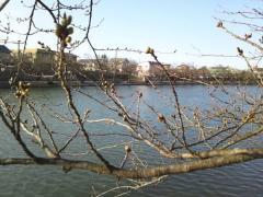 弘前公園 (8)_500
