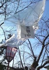 弘前公園 (2)_500