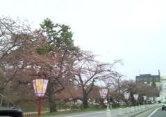 桜4.26 (1)_500
