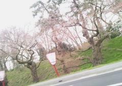 桜4.27_500