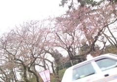 桜4.27 (1)_500