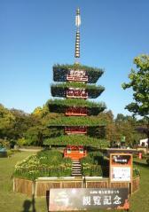 弘前菊祭り (8)_500