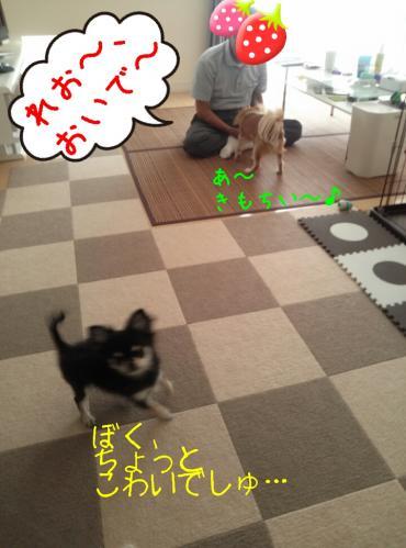 20130929212742ec2.jpg