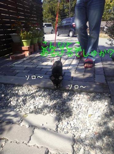 201310142121572b6.jpg