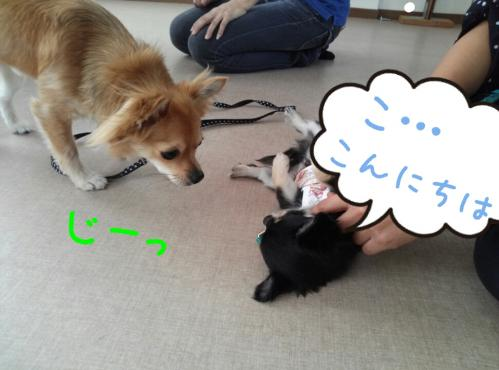 rakugaki_20130813_0003.jpg