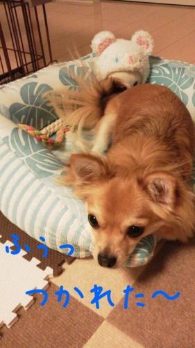 rakugaki_20130819_0004.jpg
