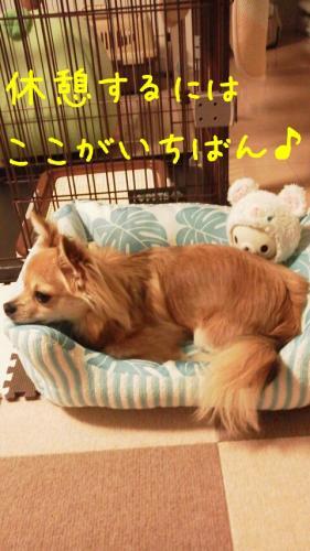 rakugaki_20130819_0005.jpg