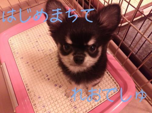 rakugaki_20130822_0005.jpg
