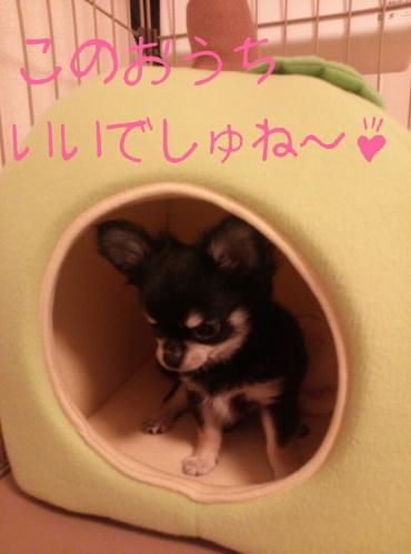 rakugaki_20130823_0002.jpg