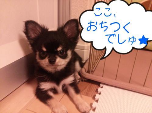 rakugaki_20130823_0006.jpg