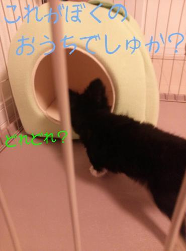 rakugaki_20130823_0014.jpg
