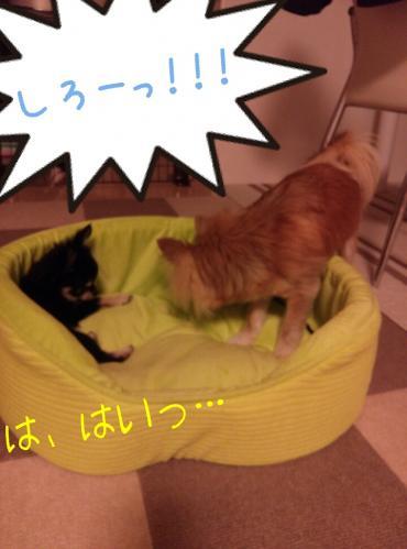 rakugaki_20130823_0042.jpg