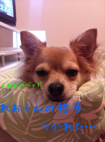 rakugaki_20130824_0001.jpg