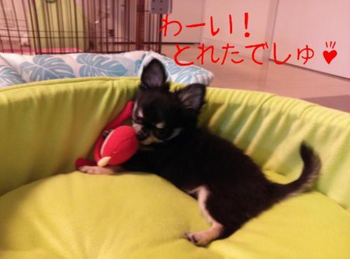 rakugaki_20130824_0002.jpg