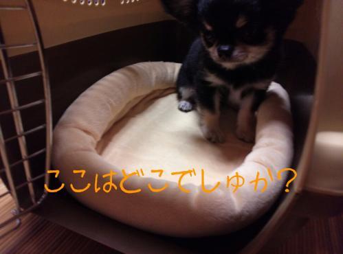 rakugaki_20130825_0011.jpg