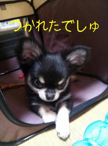 rakugaki_20130825_0026.jpg
